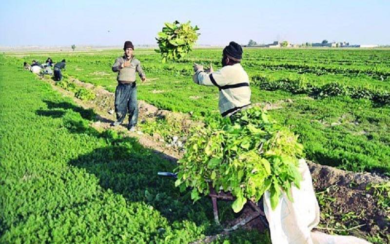 صندوق بیمه کشاورزی بهترین حامی کشاورزان است