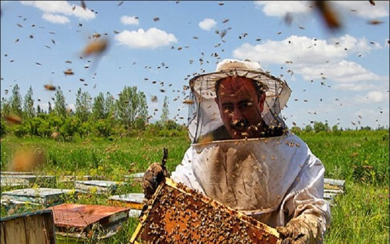 تولید افزون بر دو میلیون کیلوگرم عسل در تالش