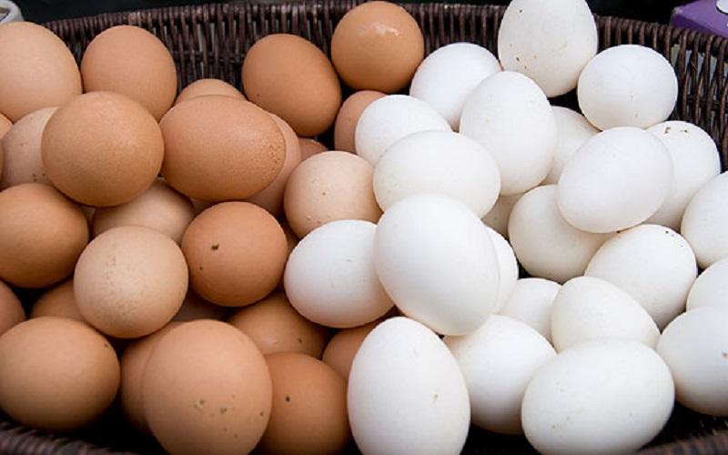 واردات هم دردی از قیمت تخممرغ دوا نکرد