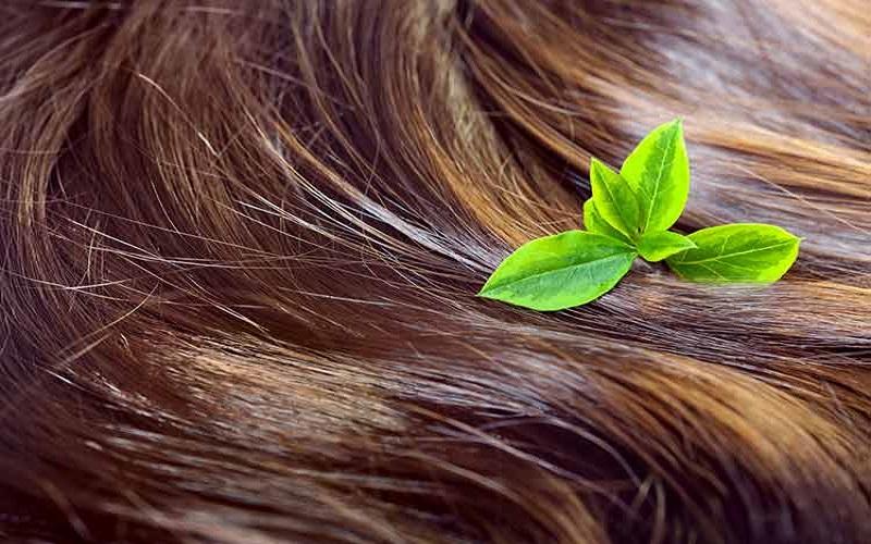 کافئین به تقویت ریشههای مو کمک میکند