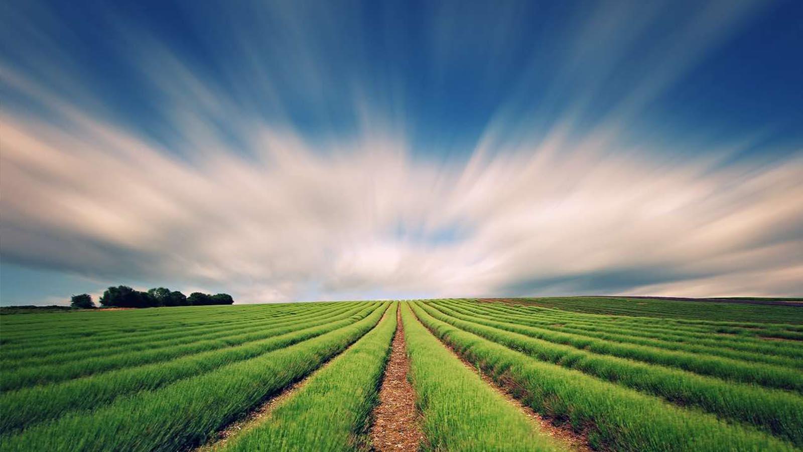 ترازنامه شخصی زمین زراعی