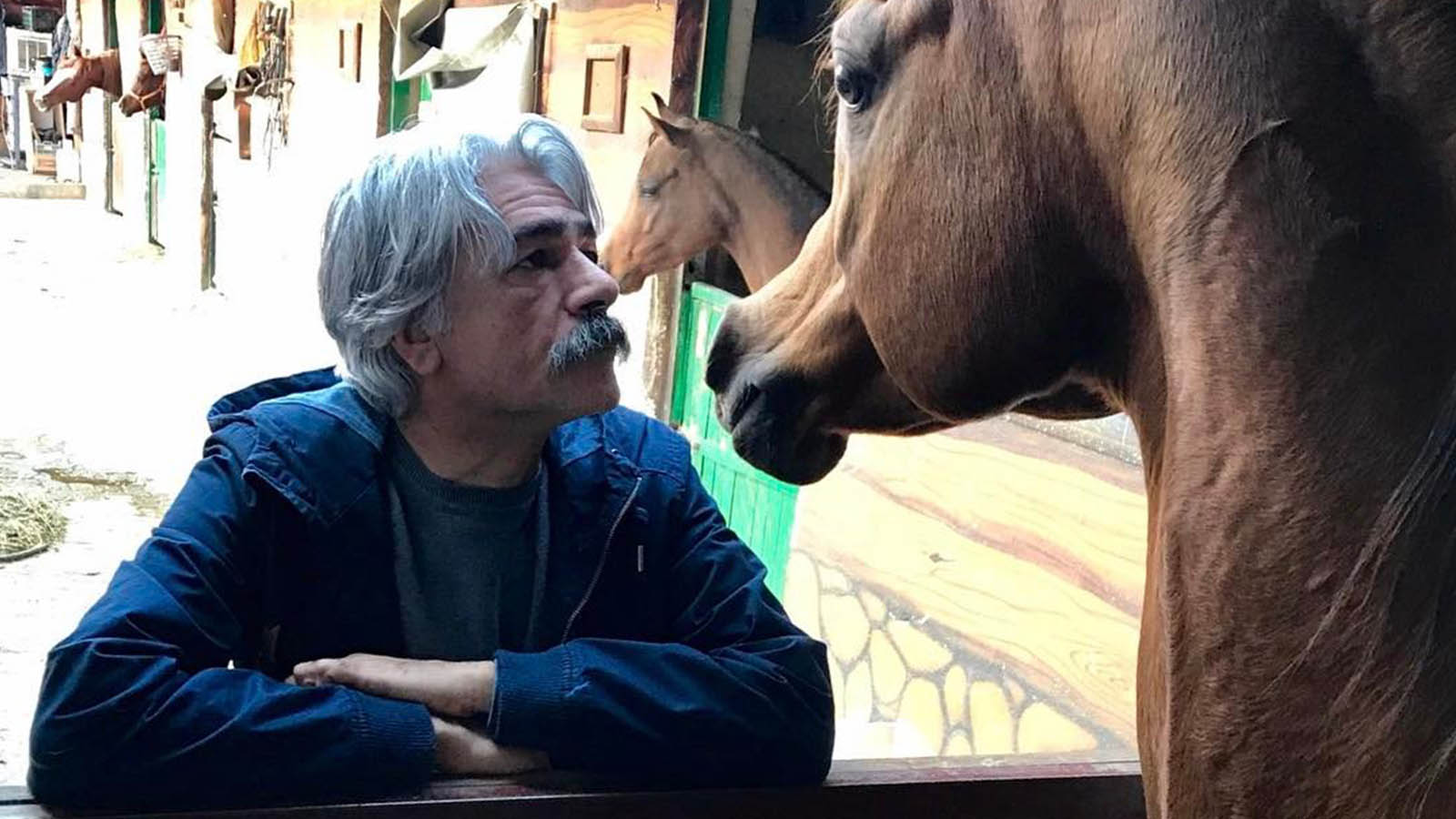 علم و ثروت کیهان کلهر اسب