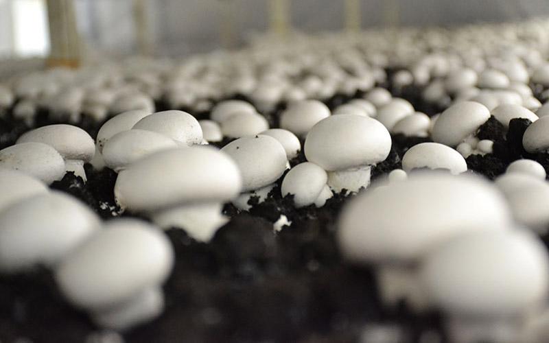 8 بیماری و عارضهای که با مصرف قارچ ایجاد میشود