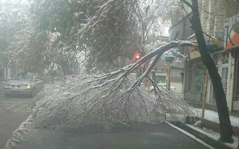 برف آسیب چندانی به درختان قدیمی تهران وارد نکرده است