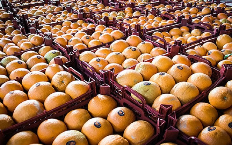 ضعف در بستهبندی عامل کاهش صادرات میوه
