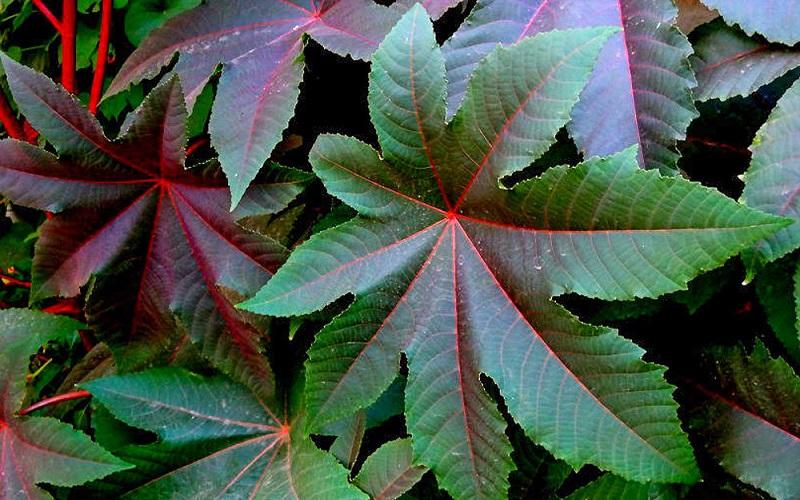 شناسایی ۳۰۰ گونه گیاه دارویی در قزوین