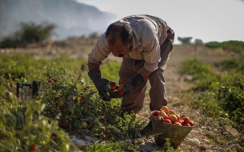 واردات محصولات جالیزی از ایران ممنوع شد