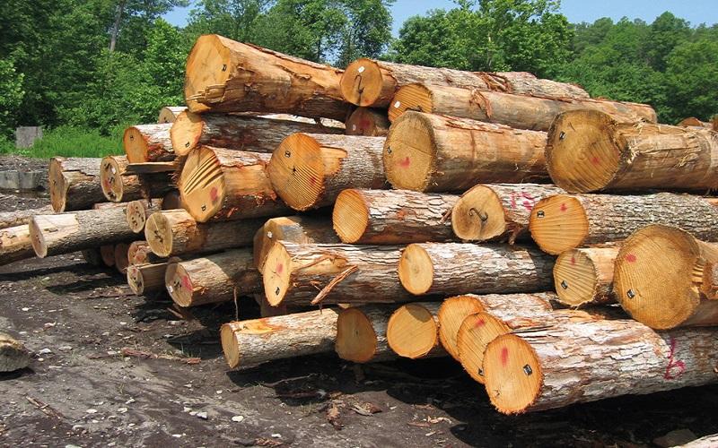 ۷۰ درصد بازار چوب ایران در اختیار محصولات خارجی