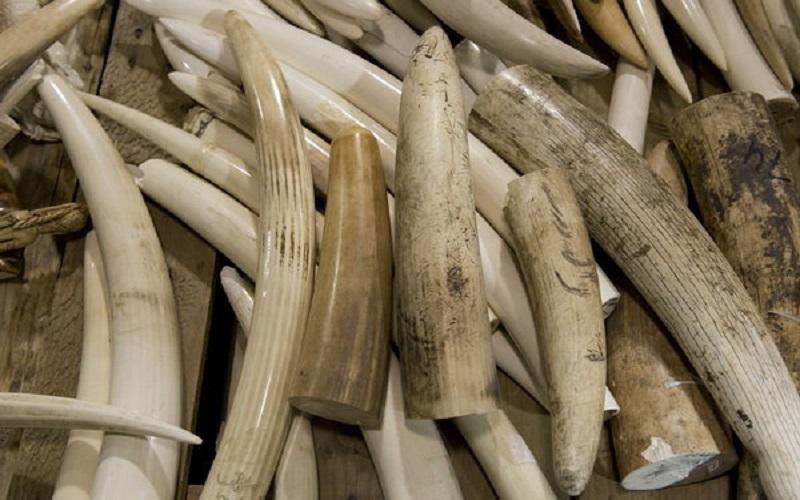 اجرایی شدن قانون منع تجارت عاج فیل در چین