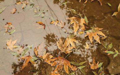 باران+تجارت نیوز