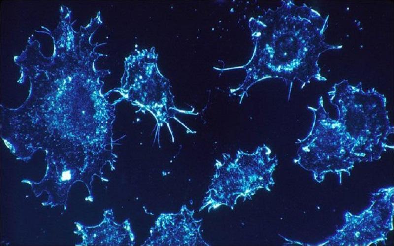 درمان قطعی سرطان با دستکاری ژنتیکی خون