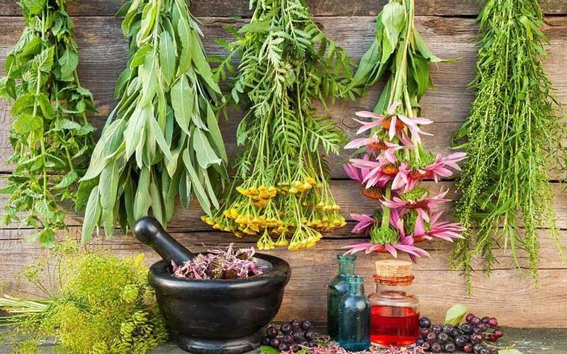 صنعت تولید داروهای گیاهی به ایجاد اشتغال کمک میکند