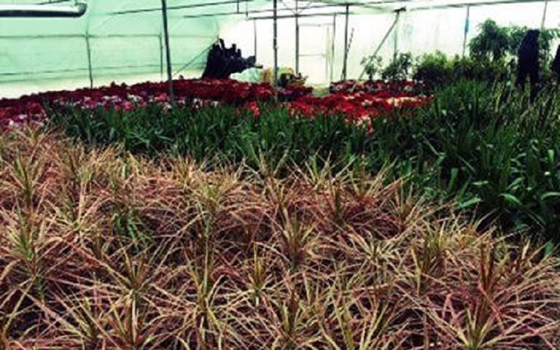 تولید 641 میلیون انواع گل و گیاهان زینتی در محلات