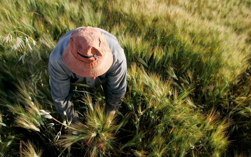 توریست داسبهدست؛ گردشگری کشاورزی خون تازه در رگهای روستا