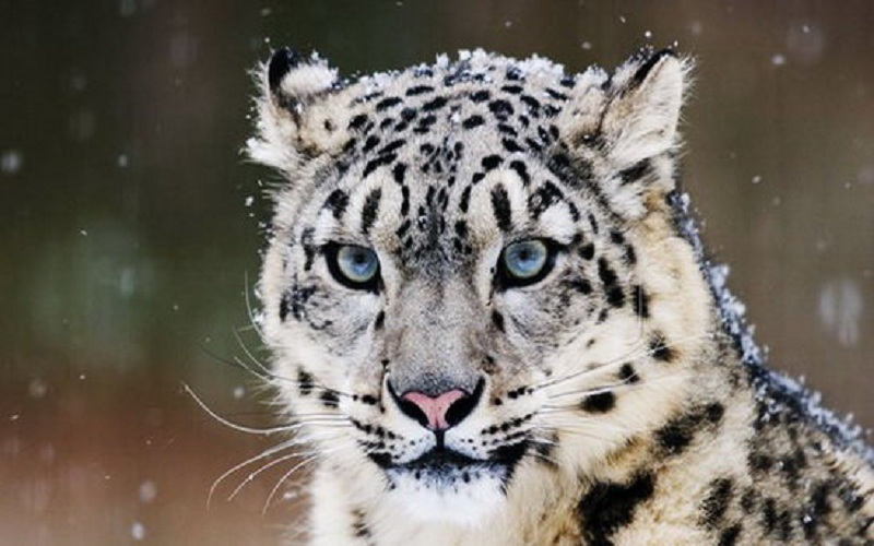 خرید و نگهداری جانوران وحشی ارتباطی با آیین باستانی نوروز ندارد