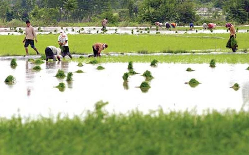 ظرفیت فراوان مازندران برای تبدیل شدن به پایلوت گردشگری زراعت