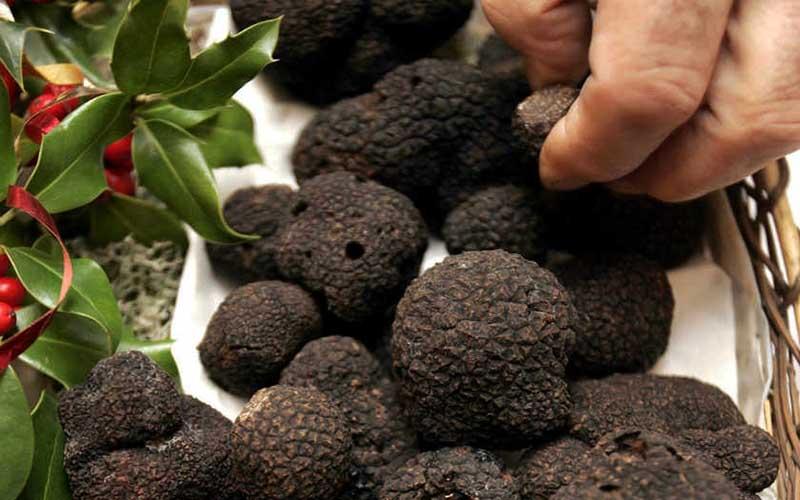 صادرات 35 تن قارچ ترافل بومی به اروپا