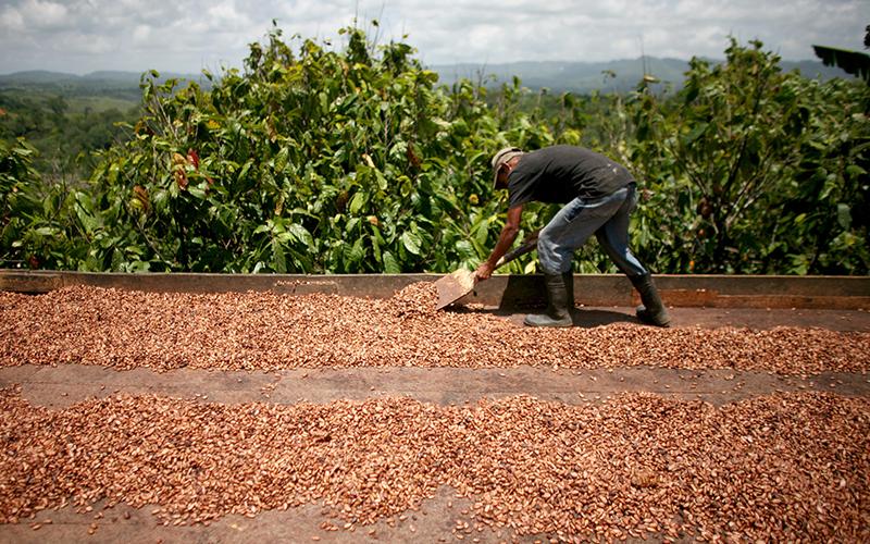 رشد ۵۳ درصدی پرداخت تسهیلات به بخش کشاورزی