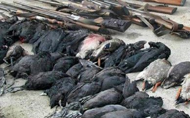 ممنوعیت شکار پرندگان وحشی در استان تهران