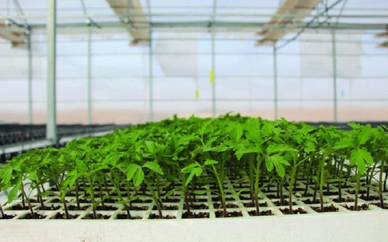تبدیل اراضی کشاورزی به گلخانه تغییر کاربری نیست