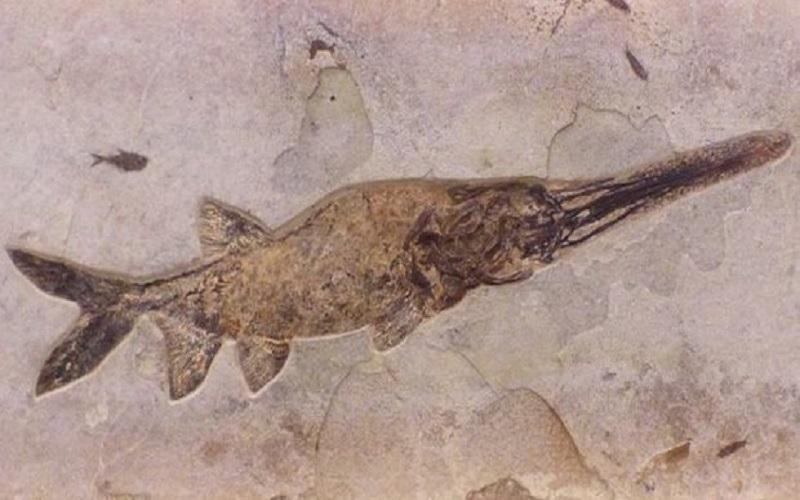 کشف فسیل 90 میلیون ساله