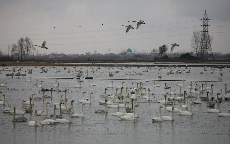 رهاسازی دان و غذای پرندگان در اطراف تالابها
