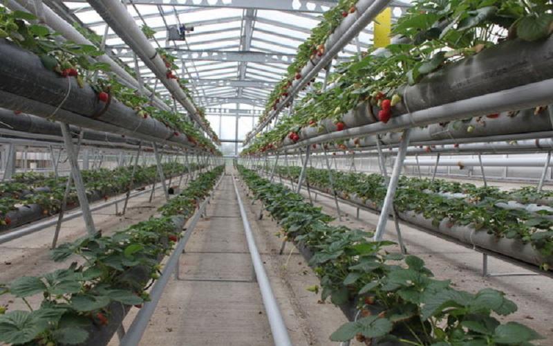 اختصاص تسهیلات کم بهره برای کشت گلخانهای