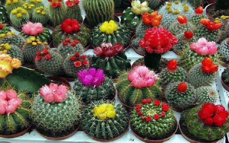 صادرات 480 اصله گیاهان زینتی از بندر امیرآباد