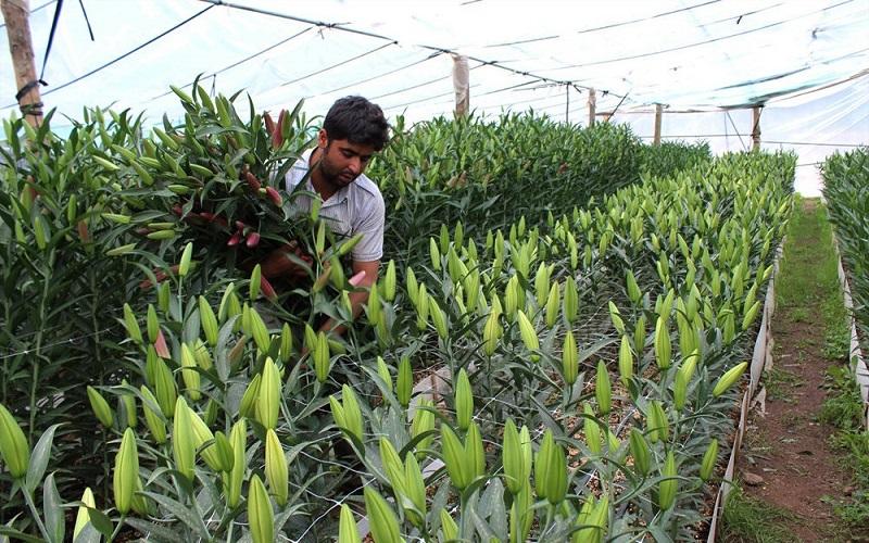 بیکاری ۷۰ درصد مهندسان کشاورزی