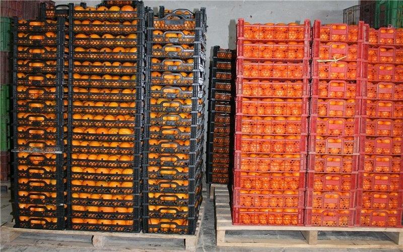 اعلام زمان توزیع سیب و پرتقال شب عید