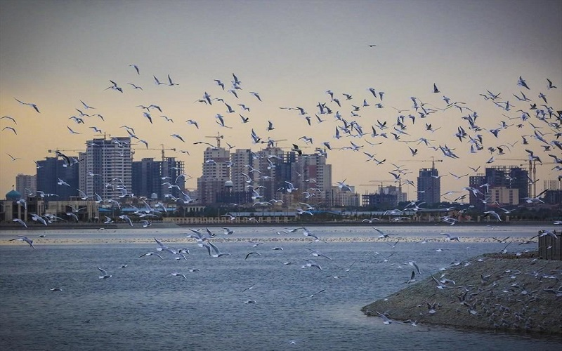 مشاهده آنفلوآنزای پرندگان در تهران
