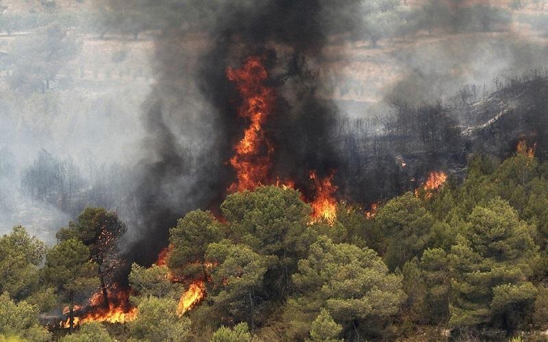 افزایش ۲۰ درصدی آتشسوزی جنگلها در سال ۹۶