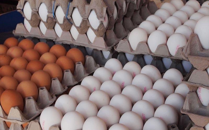 آغاز توزیع تخممرغ با قیمت مصوب از این هفته