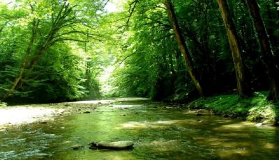 جنگلها باید برچسب اقتصادی داشته باشند