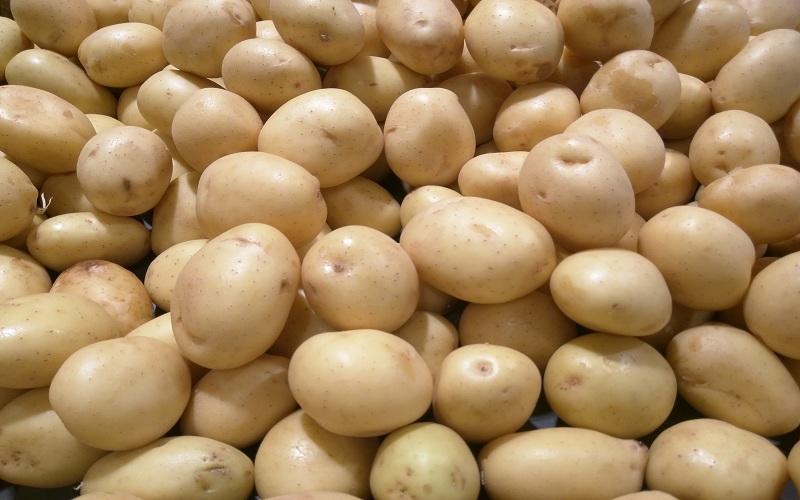 صادرات سیبزمینی مشمول پرداخت عوارض شد