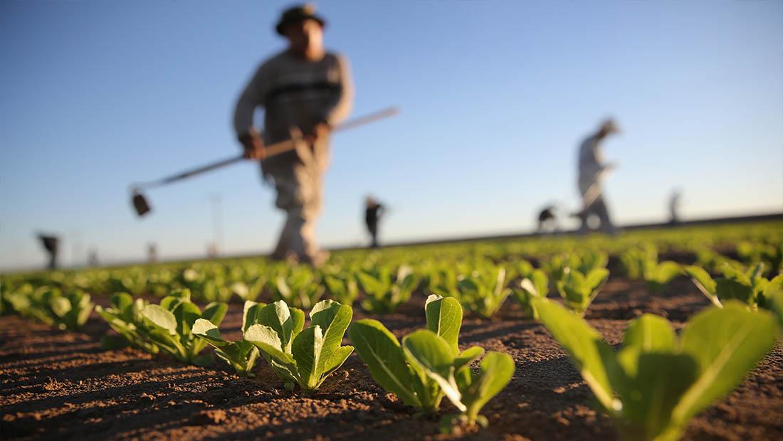 مشاغل در آینده کشاورزی