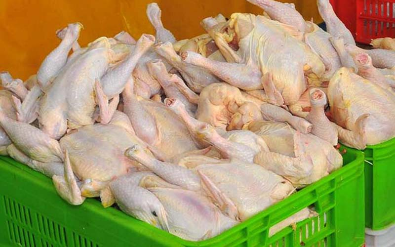 ادامه روند افزایشی نرخ مرغ