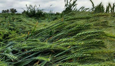 میزان خسارت بلایای طبیعی به کشاورزی جهان