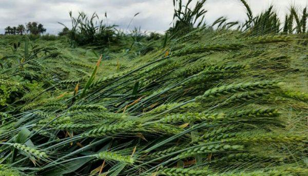 بدون توسعه کشاورزی، توسعه سایر بخشها غیرممکن است