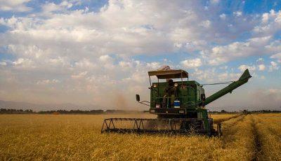 هدفگذاری تولید 14 میلیون تنی گندم