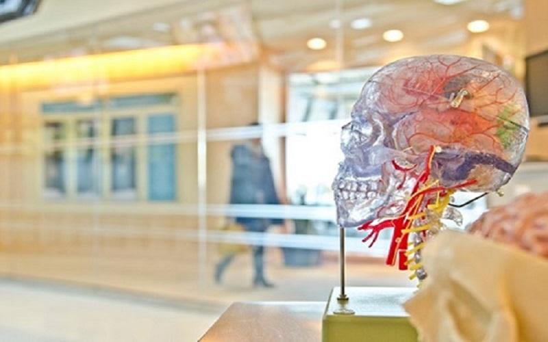 روش بهکارگیری مغز برای رسیدن به موفقیت