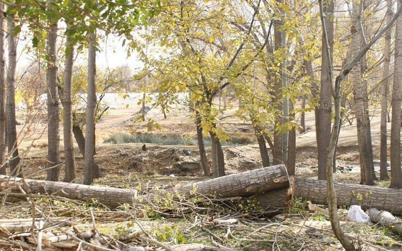 تخریب باغات تهران بر گردن افراد سوجو است