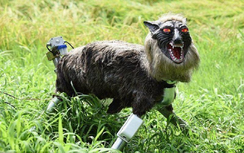 گرگ رباتیک از مزرعه ژاپنیها محافظت میکند