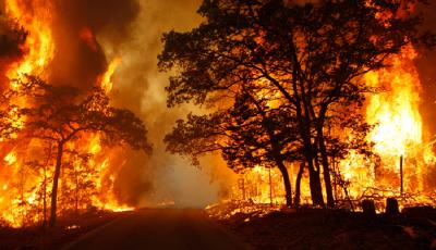 بیش از ۴ هکتار از جنگلهای بهشهر در آتش سوخت