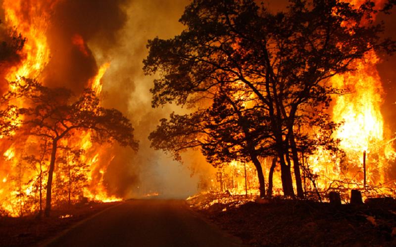 بیش از 4 هکتار از جنگلهای بهشهر در آتش سوخت