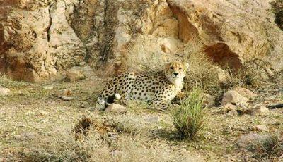 خطر انقراض ۸۷ گونه جانوری در ایران