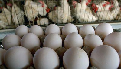 مرغها گرمازده شدهاند