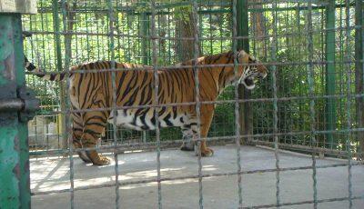 تعطیلی هفت باغ وحش در کشور