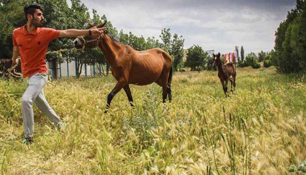 رعایت ضوابط بینالمللی، شرط تجارت اسب در ایران