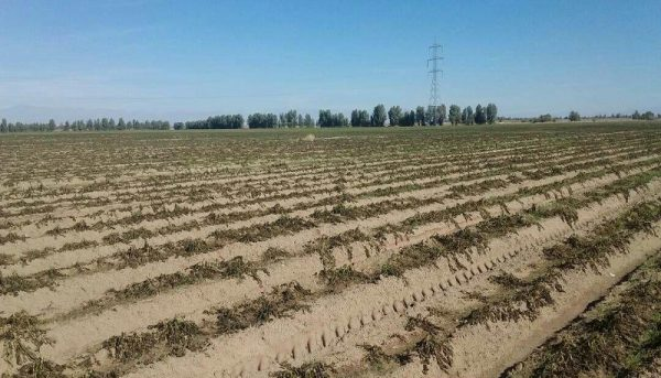 از بین رفتن ۱۲ هزار هکتار از اراضی کشاورزی نیمروز